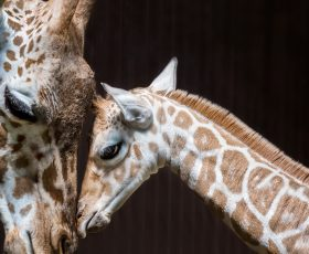 7 ways a giraffe can damage your device