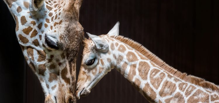 7 ways a giraffe can damage your device