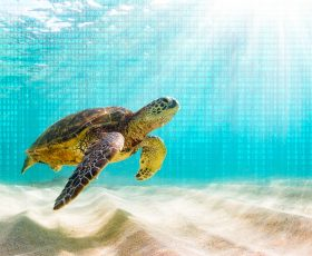 Sea Turtle – organisierte DNS-Hacker kontrollieren über Jahre das Herz des Internets